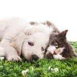 Link to Dr. Wayne Hunthausen, DVM - Dog & Cat Behavior Consultations Website