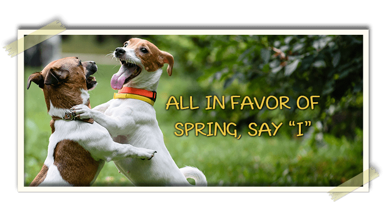 "All in Favor of spring say ""I"""